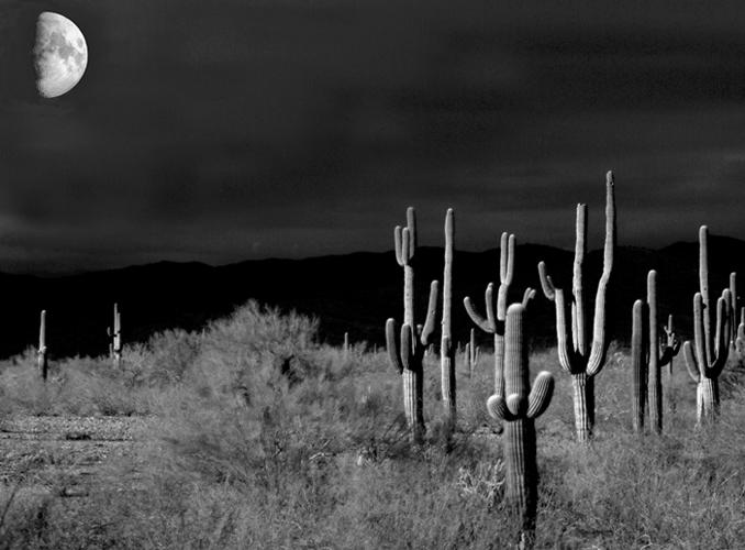 Praying_cactus